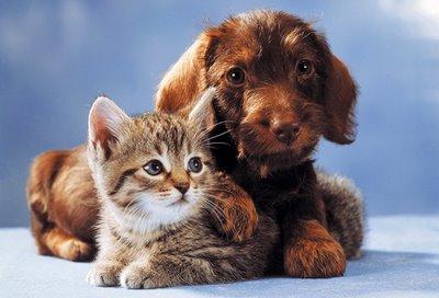 Haustiere sicher vor Zecken schützen